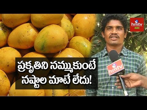 Ulavapadu Variety  Mango Cultivation | Natural Farming | hmtv Agri