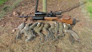 Repeat youtube video Pest Control with Air Rifles - Sniper Cam Squirrel Shooting - Pleasant Peasant Pheasants