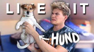 LIVE UND UNGESCHNITTEN mit Hund | Joey's Jungle