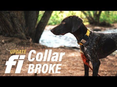Update | Fi Dog Collar BROKE - My Dog Got Loose