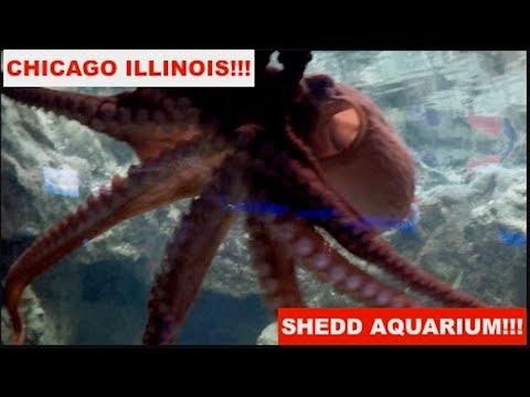 Ending of Jerzi's 2nd Birthday!! SHEDD AQUARIUM, CHICAGO IL