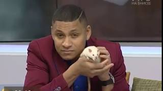 Во всемирный день декоративных крыс разбираемся в тонкостях их содержания