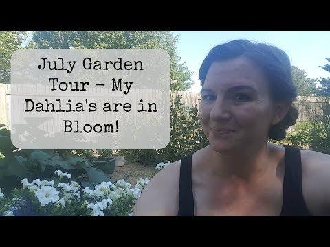 July Garden Tour - My Dahlias are in bloom