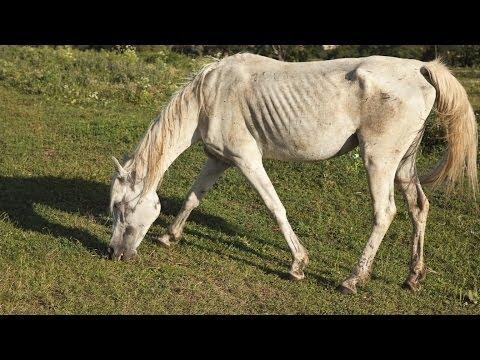 How Should I Feed My Thin Horse?