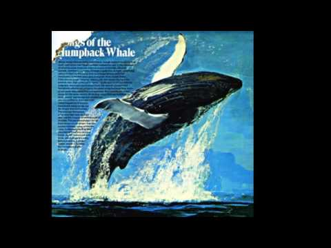 Songs Of The Humpback Whale - by Dr. Roger Payne