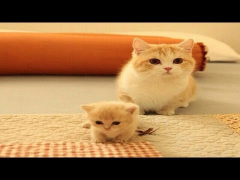 Mom Cat talking to her Cute Meowing Kittens | Cat mom hugs baby kittens