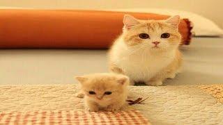 funny little kats