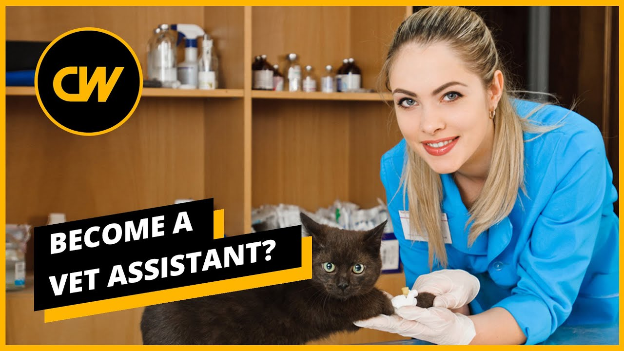 Become A Vet Assistant In 2020 Salaries Jobs And Forecasts Youtube