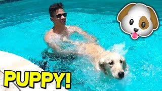 TEACHING MY PUPPY HOW TO SWIM! 🐶 (W/ MooseCraft)