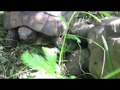 DANGER - THE FLIRTS von YouTube · Dauer:  6 Minuten 17 Sekunden