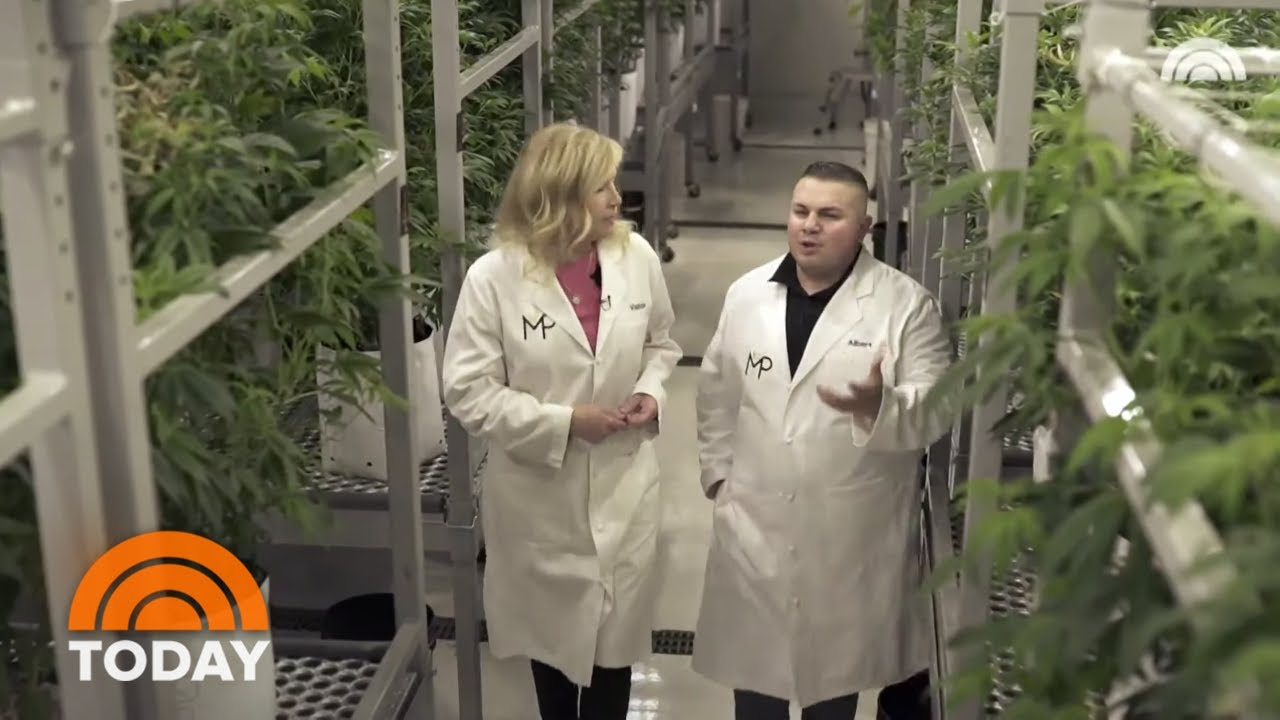 How CBD Is Extracted From Cannabis | TODAY