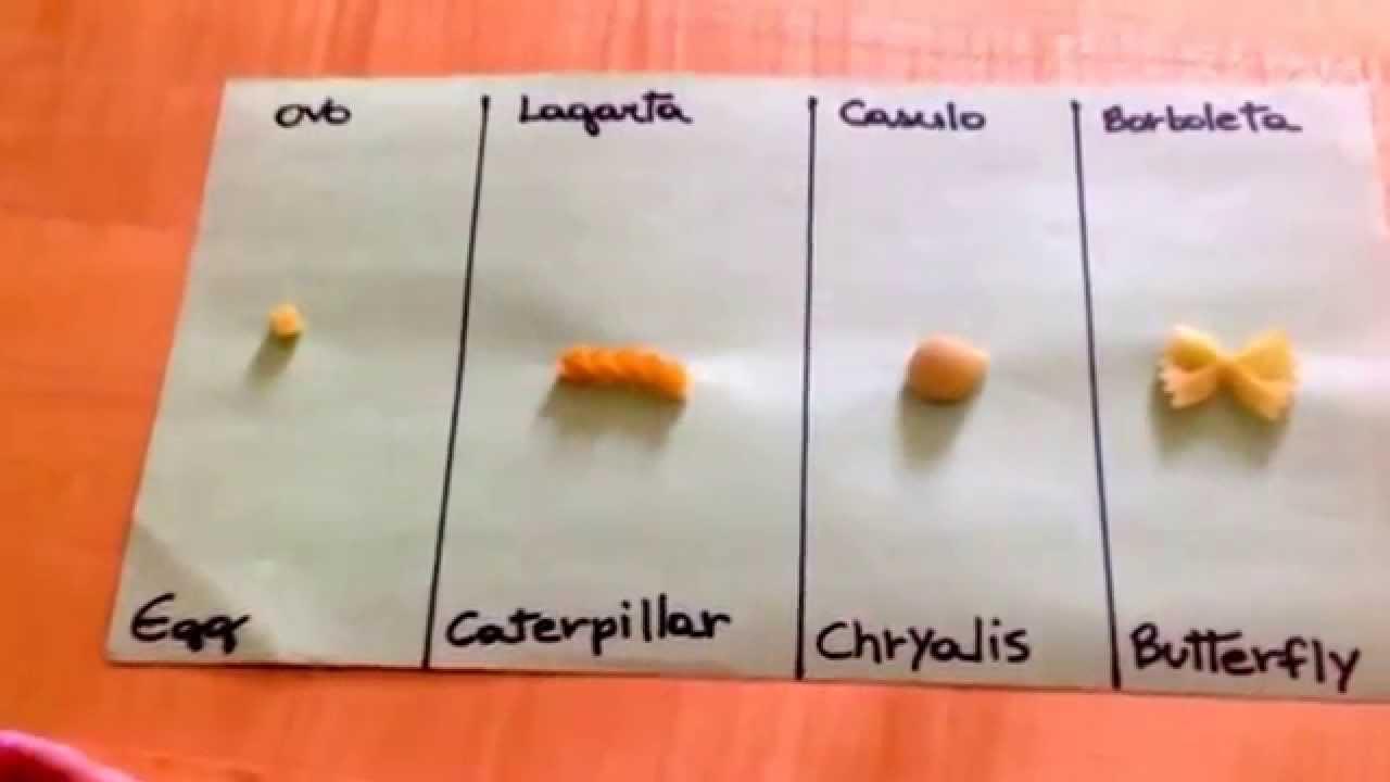 Populares Atividade escolar nos EUA mostrando o ciclo de vida da borboleta  WJ77