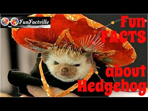 10 Fun Facts about Hedgehog