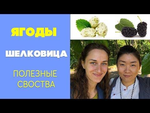 Шелковица ягоды | Полезные свойства шелковицы ягоды | Тутовник