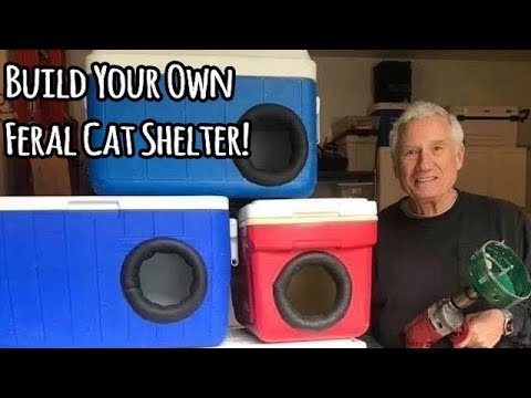 Your Full Guide To Make Stray Cat Shelter!