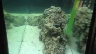 New Saltwater Fish/coral Tank