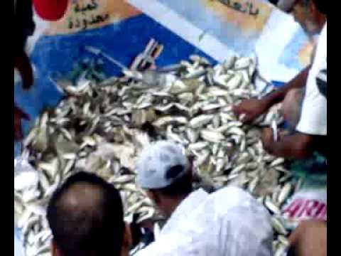 Fishing in Alexandria (Sobhan Allah)