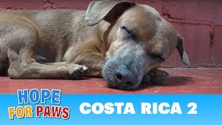 Hope For Paws: Rescuing dogs in the Costa Rican jungles!