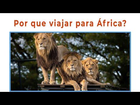 África - 4 Motivos para você viajar para a África
