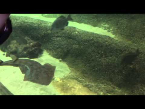 Vlog #6 Chula Vista Discovery Center Part1