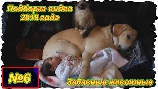 Забавные животные . Выпуск №6 . ( Подборка видео 2018 года)