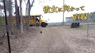 飼い主の女の子が学校から帰ってきたときの雄鶏が可愛すぎるw 海外の反応 thumbnail