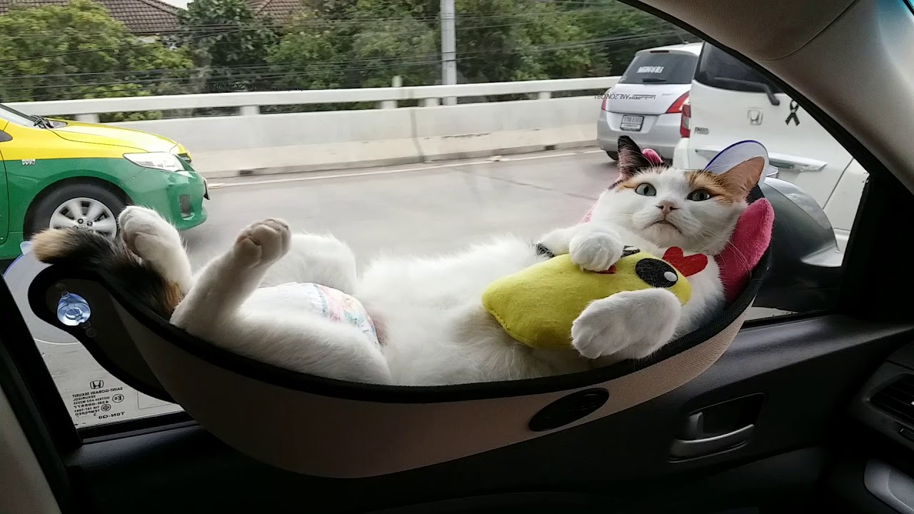 Cat bed on window - YouTube 973a536d3e