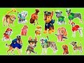 Learn the cartoon dogs breeds |  Popular cartoon dogs from Paw Patrol