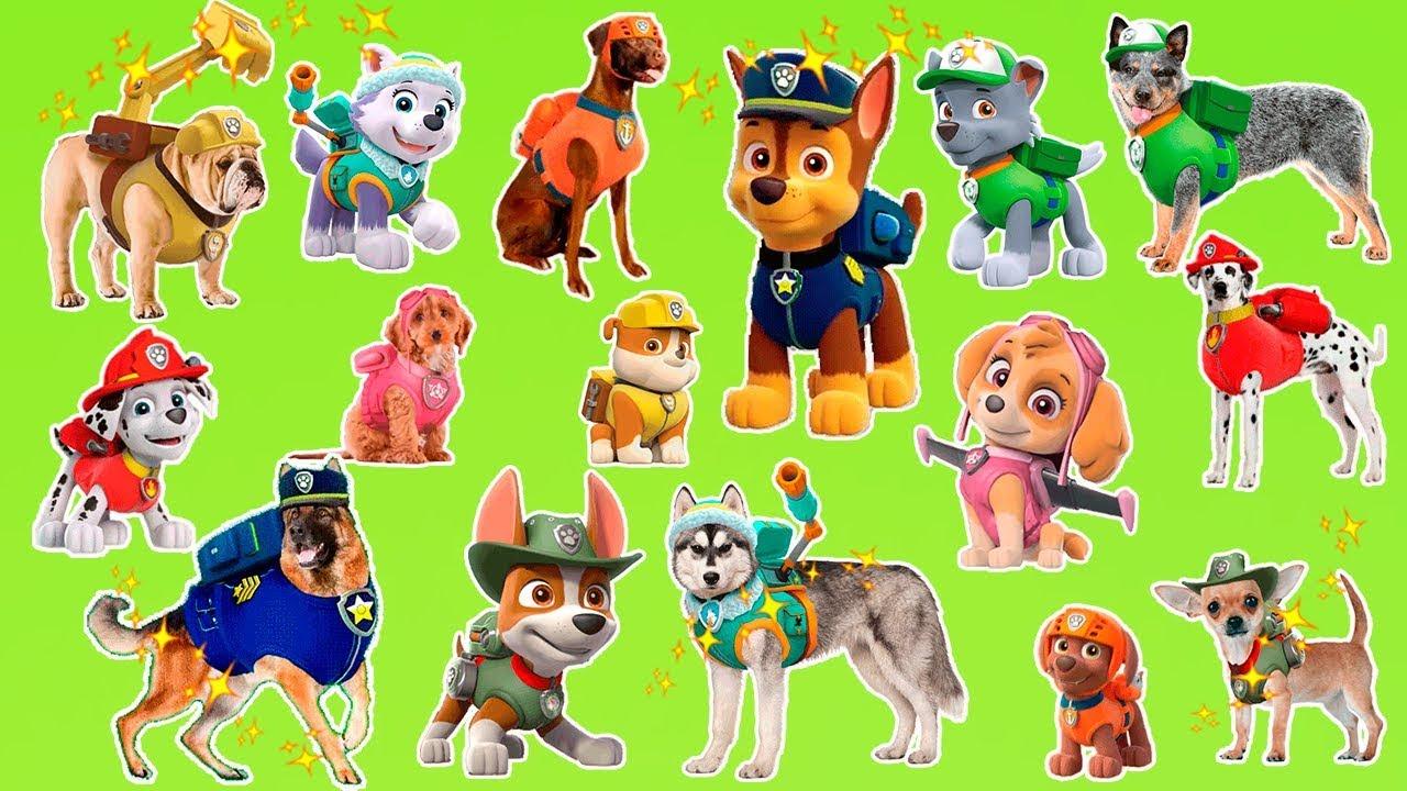 Paw Patrol Dog Breeds
