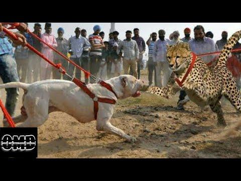 Top 10 MOST Dangerous Dog Breeds in the World (2019) | इन कुत्तों से सावधान