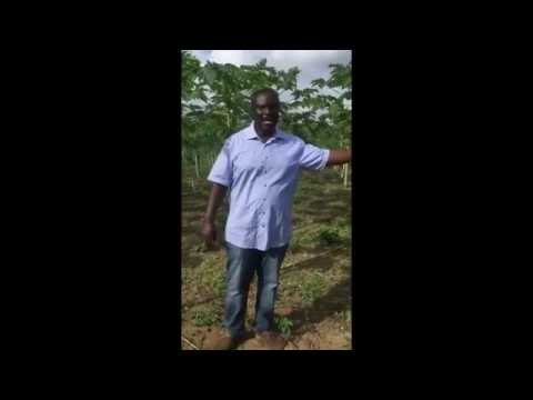 Nature & More grower Kwadwo of M.G. Farms Ltd