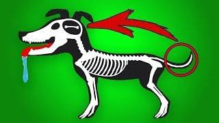 Si  tu perro hace esto, corre y pide ayuda