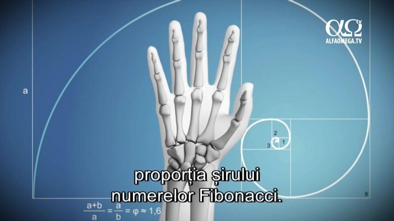 E adevărat 14 – Mâini utile șiversatile