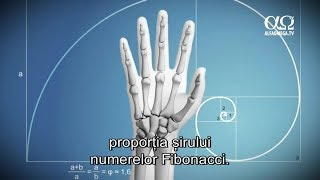 E adevărat 14 - Mâini utile și versatile