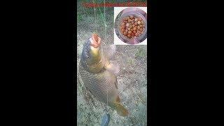 Рыбалка на Супер уловистые бойлы  + жмыховница