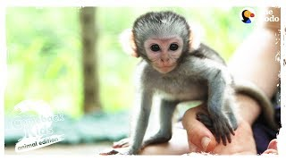 The Bravest Cutest Baby Monkey In The World The Dodo Comeback Kids S02E03