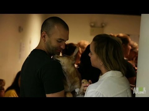 Adopt! Adopt! Adopt! | Puppy Bowl X