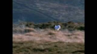 Lyra Celtica  - Haughs of Cromdale