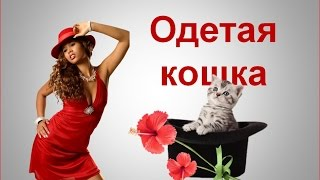 Одетая кошка. Сшейте одежду для кошки своими руками
