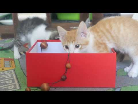 Kittens playing with wood balls 4k UHD  🐈 🐱