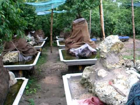 Vườn cây sanh Bình An 1, Phước Thành, Tuy Phước, Bình Định