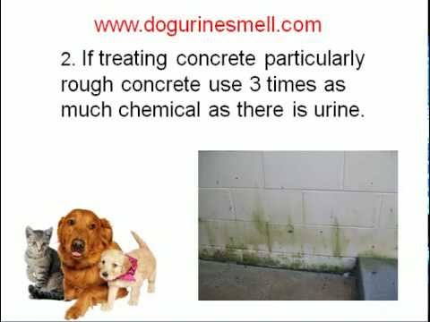 best way to remove cat urine odor from furniture