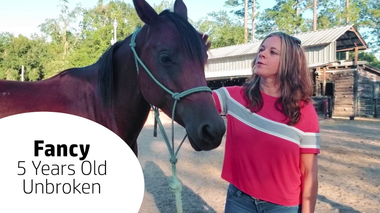 Adoption Series: Fancy, the Horse
