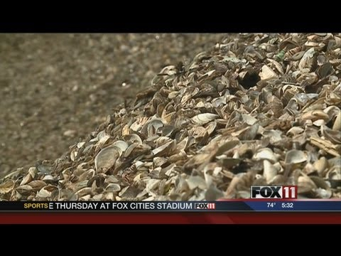 New plan to deal with zebra mussels