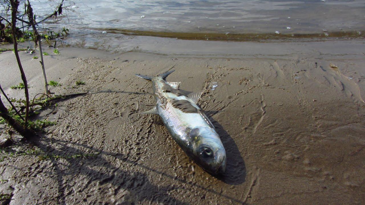 рыбалка на волге 2016 видео волгоград
