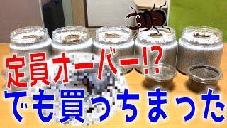 昆虫採集☆カブトムシ☆クワガタムシ 外国産クワガタの幼虫届く】(くろね...