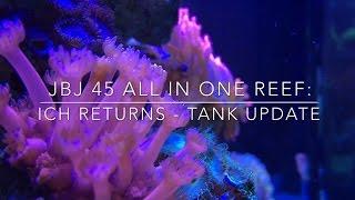 jbj 45 all in one reef ich returns tank update
