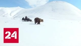 видео Медвежьи объятия России | Общество | ИноСМИ - Все, что достойно перевода