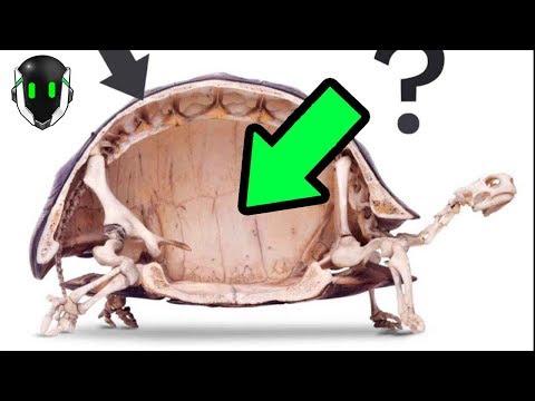 VIDEO: ¿PUEDE UNA TORTUGA VIVIR FUERA DEL CAPARAZÓN?