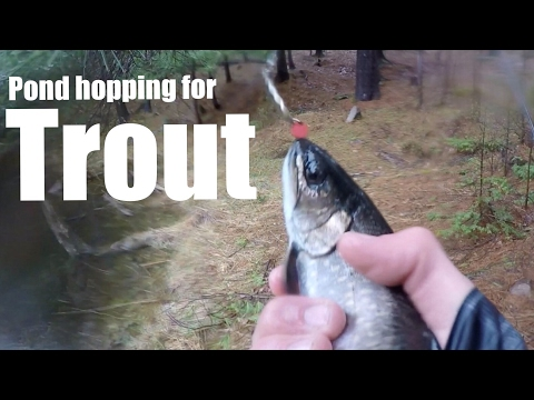Pond Hopping For Trout In The Rain